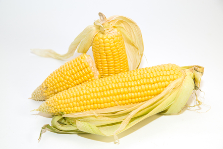 foodstuff: A few mature ears of corn on over white