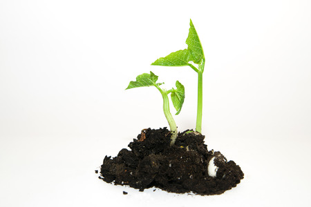 chit: Green plants growing from a pile of soil on a white background