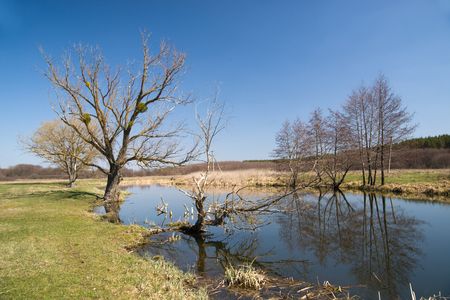marge: Old tree on the bank of the river  against the blue sky