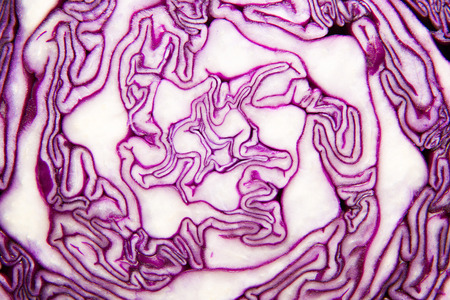 regimen: The fruit of red cabbage cut with a sharp knife Stock Photo