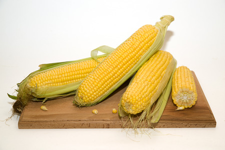 foodstuff: A few mature ears of corn on a wooden surface