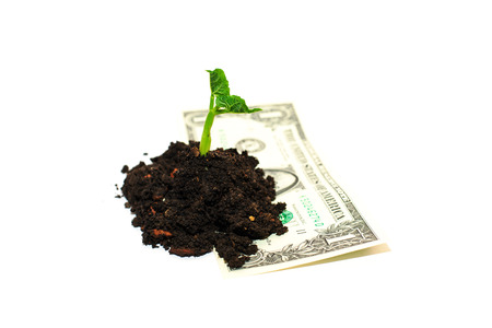 bourgeon: Green plant growing from a pile of soil and banknote on a white background Stock Photo