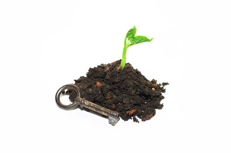 chit: Green plant growing from a pile of soil and old key on a white background