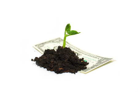 germinate: Green plant growing from a pile of soil and banknote on a white background Stock Photo