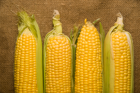 mellow: A ripe fruits of corn on old cloth Stock Photo