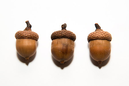 acorn seed: Three  brown acorns  with caps on over white Stock Photo