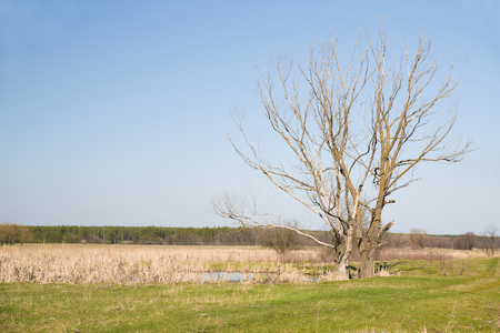 marge: Old trees on the bank of the river  against the blue sky
