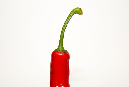 soundness: One red  pepper on a white background