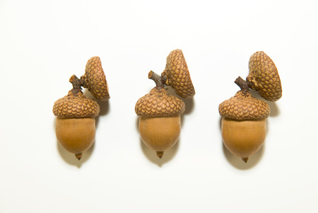curfew: Three brown acorns  with cap on over white Stock Photo