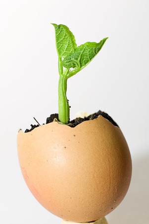 bourgeon: Green plants sprout up from a broken egg