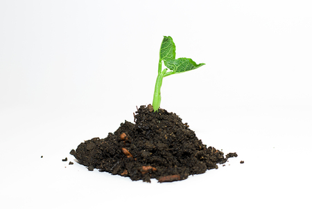 springtide: Green plants sprout up from the ground pile Stock Photo