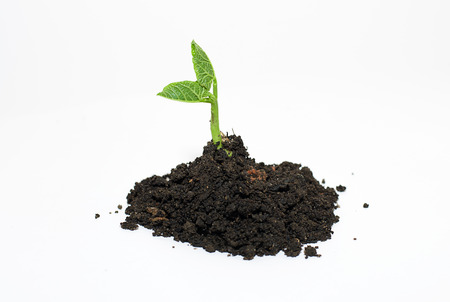 bourgeon: Green plants sprout up from the ground pile Stock Photo