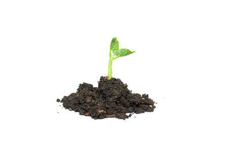 potherb: Green plants sprout up from the ground pile Stock Photo