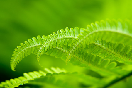 bush to grow up: Green fern leaves in spring on a sunny day