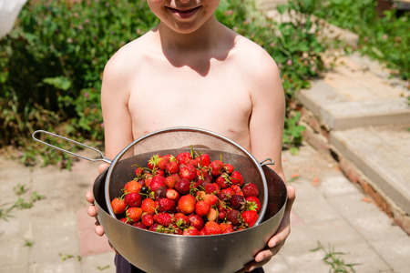 muster: The boy holds a metal bowl with strawberries Stock Photo