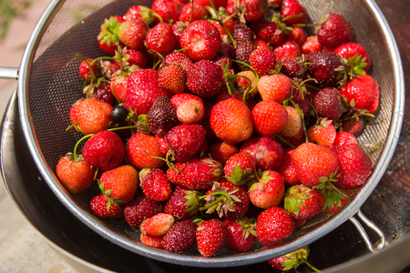 muster: Metal bowl with strawberries is on the floor