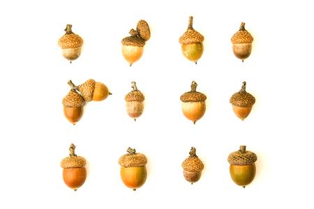 Many dried autumn acorns on white