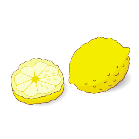 cellulose: Illustration of yellow lemon with slice isolated on white