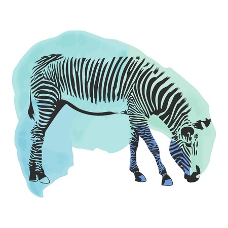 Colorful watercolor zebra cover. Abstract background Vector