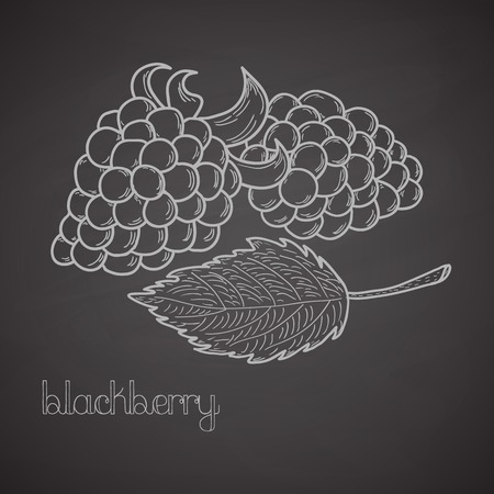 bramble: Chalkboard label with blackberries and leaf. Handdrawn design