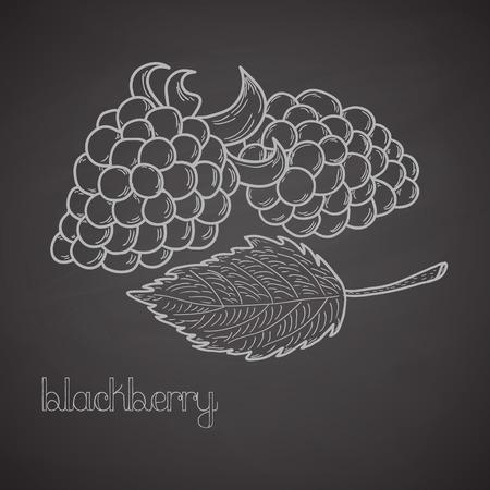 blackberries: Chalkboard label with blackberries and leaf. Handdrawn design