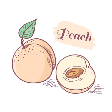 peachy: Hand drawn peach with slice. Vector illustration