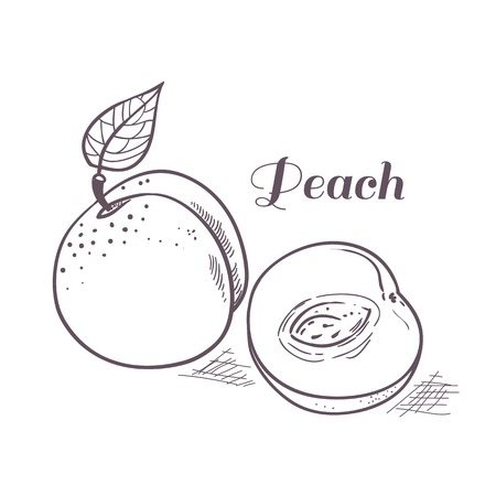 peachy: Hand drawn outline peach with slice. Vector illustration