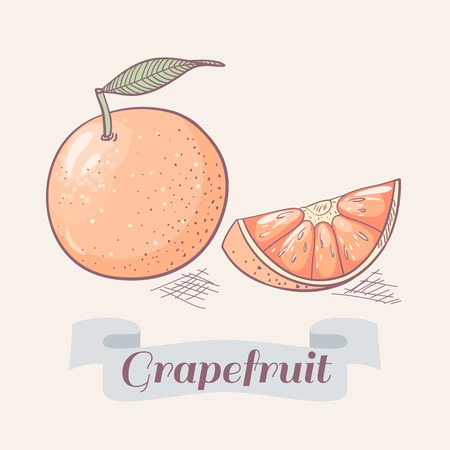 grapefruit: Hand drawn grapefruit vector illustration Illustration