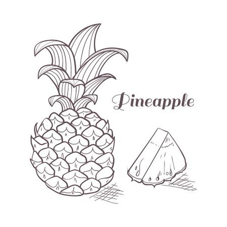 pineapple slice: Vector illustration of engraving pineapple Illustration