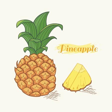 pineapple slice: Vector illustration of hand drawn pineapple