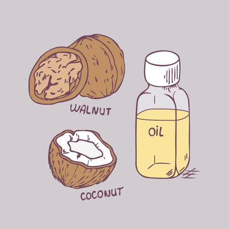 Healing nut oils set in vector. Coconut and walnut closeup illustration Vector