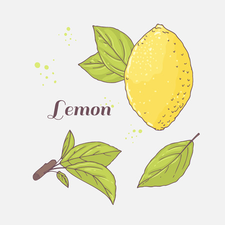 limon caricatura: Set of hand drawn lemon and leaves. Doodle fruit for package or kitchen design. Vector illustration Vectores