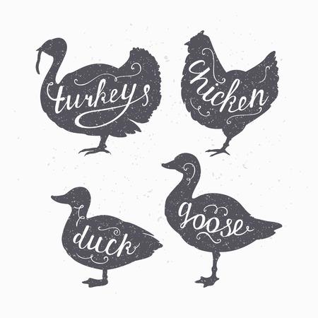 carnicero: Conjunto de dibujado a mano de estilo inconformista granja aves siluetas. Pollo, pavo, ganso, letras de la mano de la carne de pato. Carnicero plantilla de diseño de la tienda para el envasado de la carne de artesanía o restaurante de comida. Estilo artesanal. Ilustración vectorial Vectores