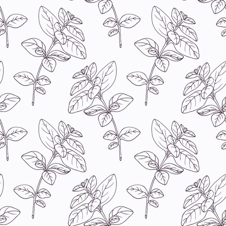 oregano: Hand drawn oregano branch outline seamless pattern. Doodle drawing spicy herbs. Kitchen background. Hand drawn seasoning. Vector illustration Illustration
