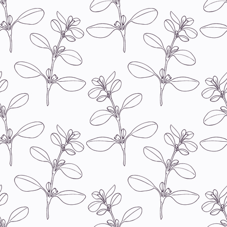 Hand drawn marjoram branch outline seamless pattern. Doodle drawing spicy herbs. Kitchen background. Hand drawn seasoning. Vector illustration