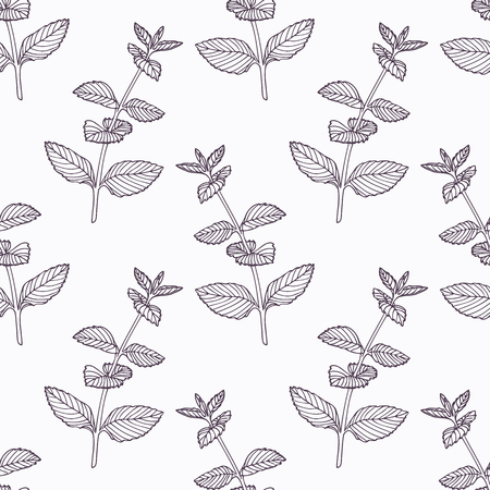 seasoning: Hand drawn mint branch outline seamless pattern. Doodle drawing spicy herbs. Kitchen background. Hand drawn seasoning. Vector illustration