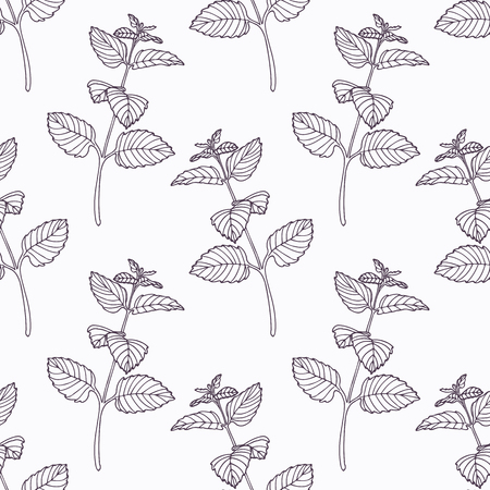 seasoning: Hand drawn melissa branch outline seamless pattern. Doodle drawing spicy herbs. Kitchen background. Hand drawn seasoning. Vector illustration Illustration