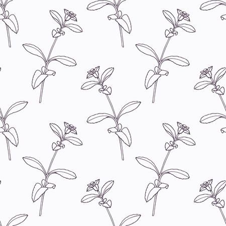 seasoning: Hand drawn stevia branch outline seamless pattern. Doodle drawing spicy herbs. Kitchen background. Hand drawn seasoning. Vector illustration Illustration