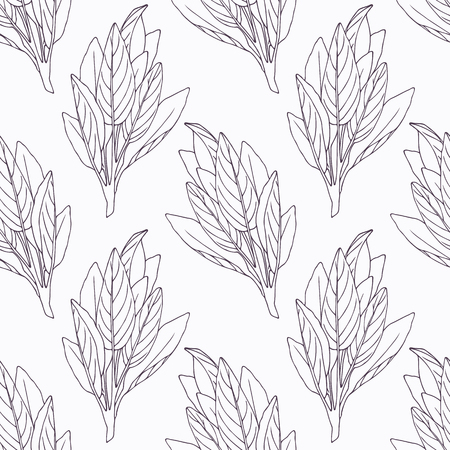 sage: Hand drawn sage branch outline seamless pattern. Doodle drawing spicy herbs. Kitchen background. Hand drawn seasoning. Vector illustration