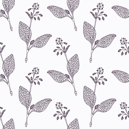 hand drawn flower: Hand drawn borage branch outline seamless pattern. Doodle drawing spicy herbs. Kitchen background. Hand drawn seasoning. Vector illustration