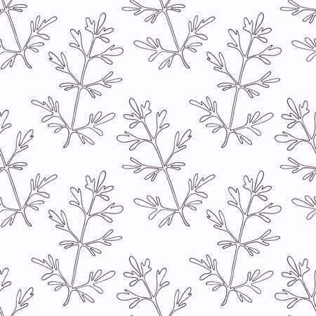 rue: Hand drawn ruta or rue branch outline seamless pattern. Doodle drawing spicy herbs. Kitchen background. Hand drawn seasoning. Vector illustration