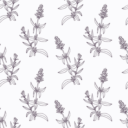 officinalis: Hand drawn hyssop branch outline seamless pattern. Doodle drawing spicy herbs. Kitchen background. Hand drawn seasoning. Vector illustration