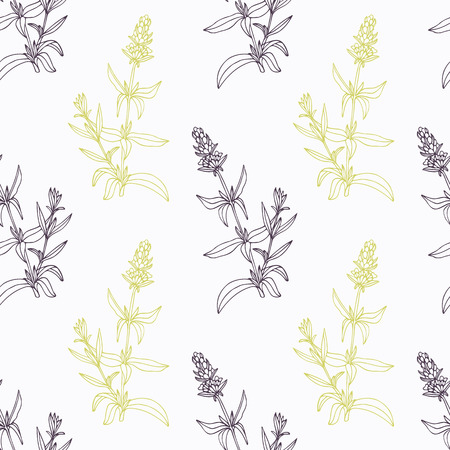 officinalis: hyssop branch wirh flowers stylized black and green seamless pattern. Doodle drawing spicy herbs. Kitchen background. Illustration