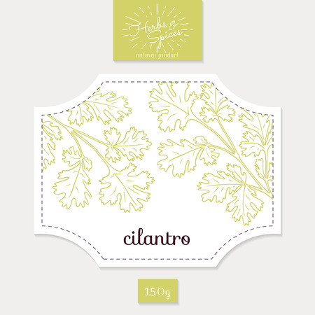 cilantro: Product sticker with  cilantro or coriander leaves. Spicy herbs packaging design. Food label template.
