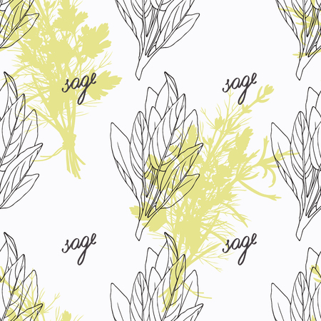 salvia: Hand drawn sage branch and handwritten sign. Spicy herbs seamless pattern with hand lettering seasoning title. Doodle kitchen background.