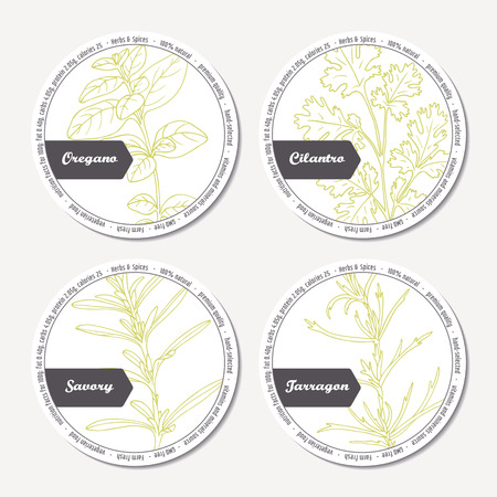 tarragon: Set of stickers for package design with  oregano, tarragon, savory, cilantro. Hand drawn spicy herbs. Labels template with place for text. Vector illustration Illustration