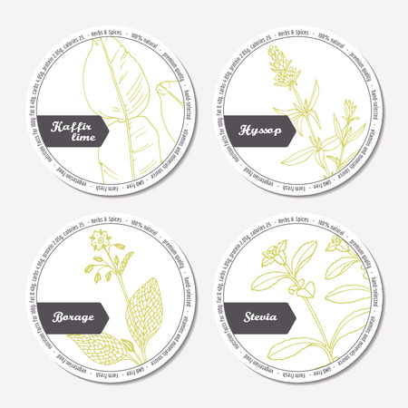 condiments: Set of stickers for package design with kaffir lime, borage, hyssop, stevia. Hand drawn spicy herbs. Labels template with place for text. Vector illustration Illustration