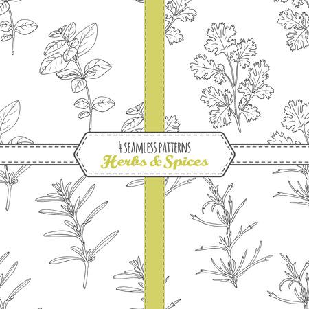 Disegnato a mano collezione modelli senza soluzione con origano, dragoncello, santoreggia, coriandolo. Doodle erbe aromatiche. sfondo di cucina. illustrazione di vettore