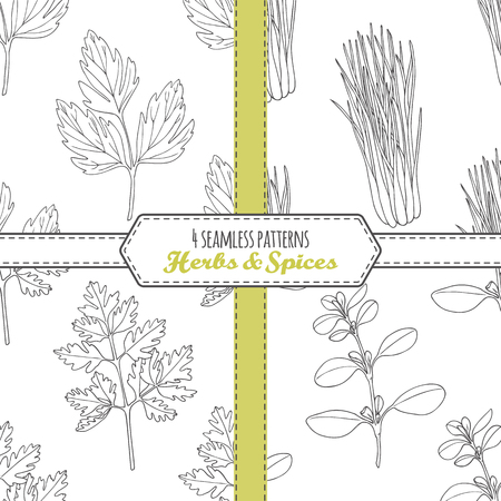 Hand drawn seamless patterns collection with lovage, lemongrass, chervil, marjoram. Doodle drawing spicy herbs . Kitchen background. Vector illustration