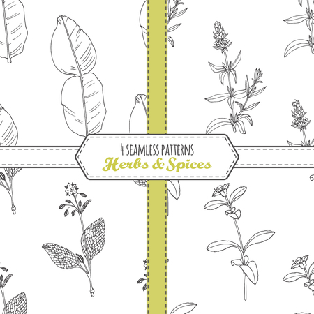cooking ingredients: Hand drawn seamless patterns collection with kaffir lime, borage, hyssop, stevia. Doodle drawing spicy herbs . Kitchen background. Vector illustration